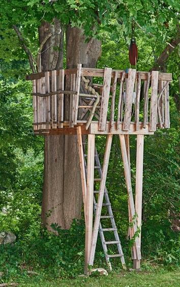 beware of tree damage and injuries