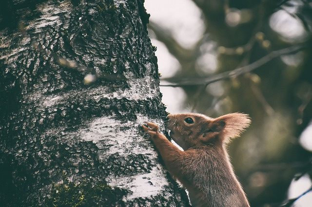 trees can become a target for rodents